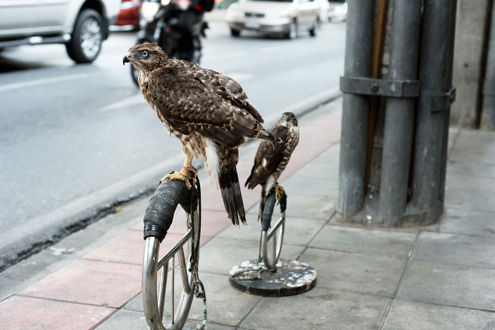 1 neighborhood ramkhamhaeng bird of prey