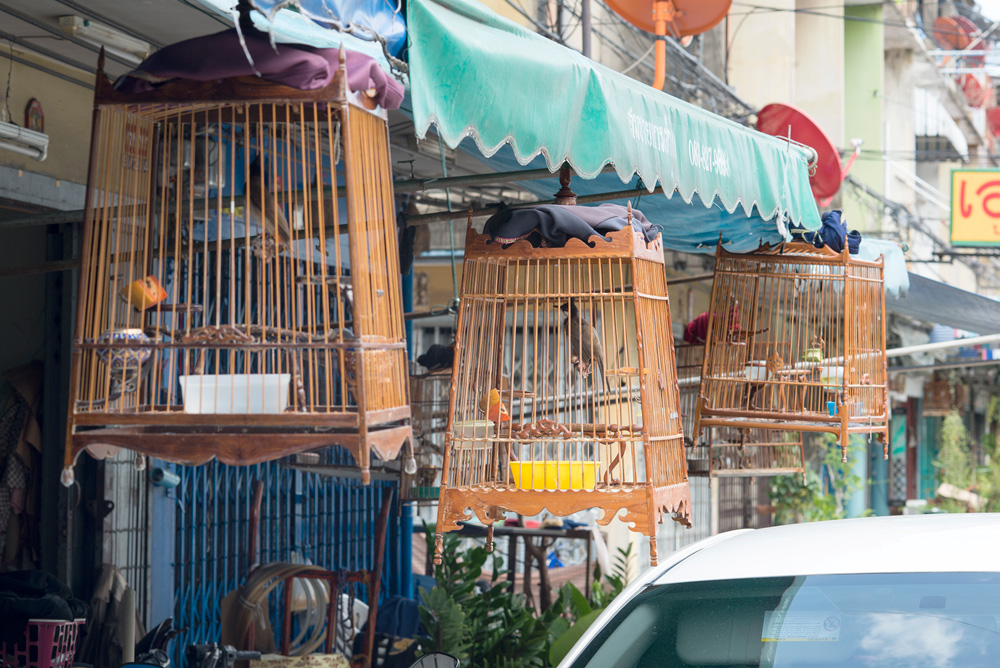 21 neighborhood din%20daeng bird cage