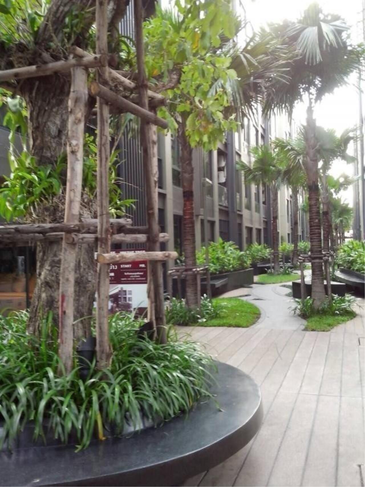 the tree privata condo bangkok 590c5bcf6d275e34eb000767_full