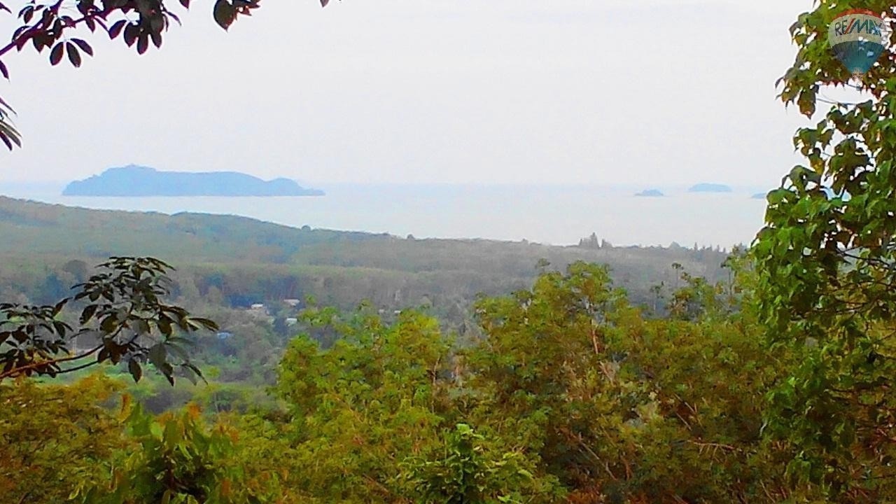 RE/MAX Top Properties Agency's Land for sale in Yamu 1