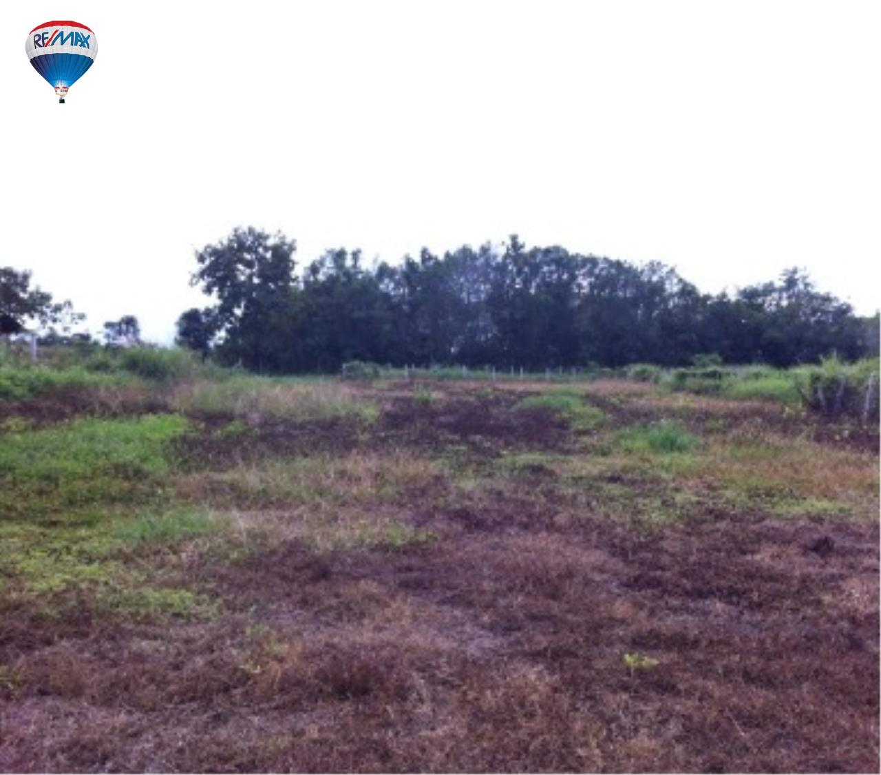 RE/MAX Classic Agency's nice land for build the house Chiang Rai  1