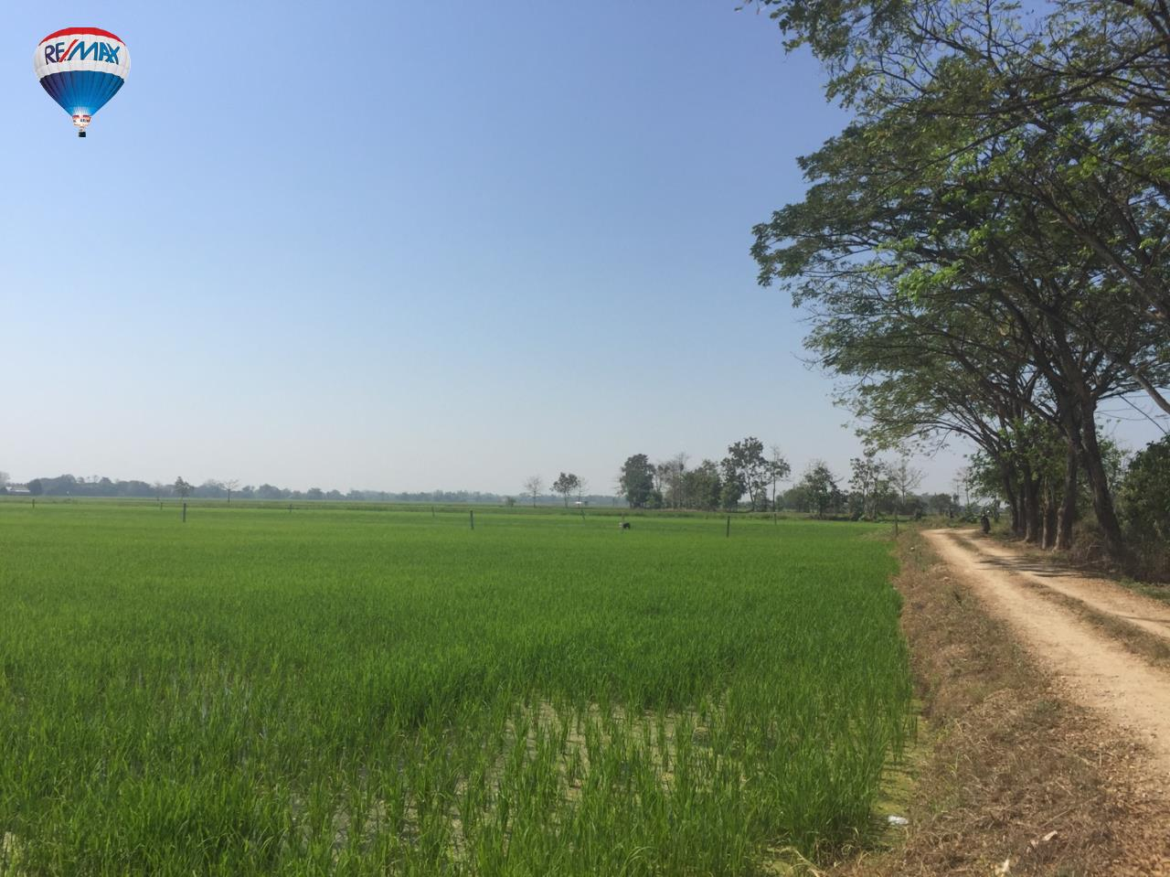 RE/MAX Classic Agency's Rice field for  sale affordable price in Chiangrai 5