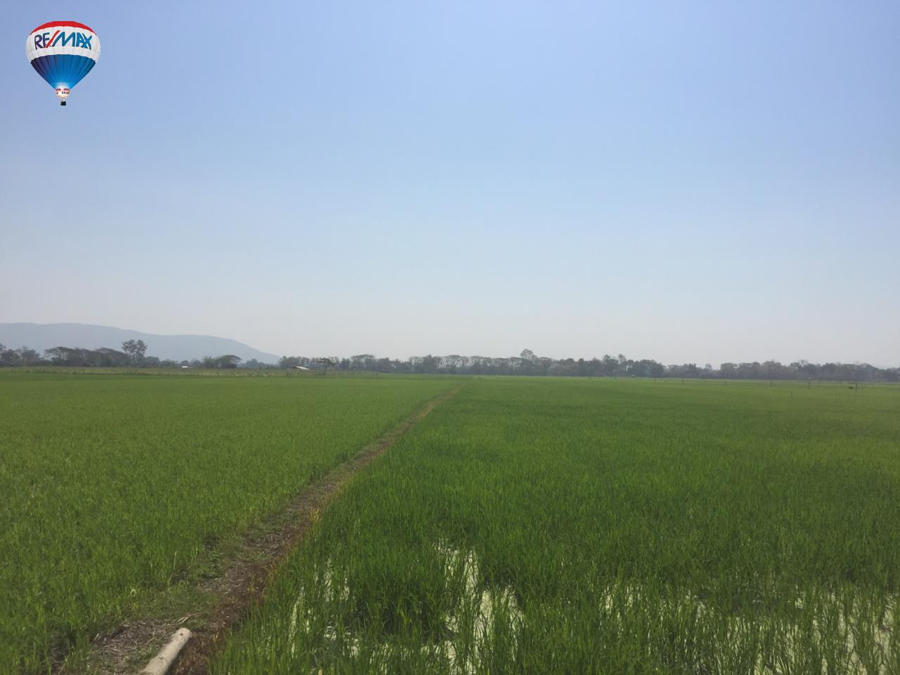 RE/MAX Classic Agency's Rice field for  sale affordable price in Chiangrai 7
