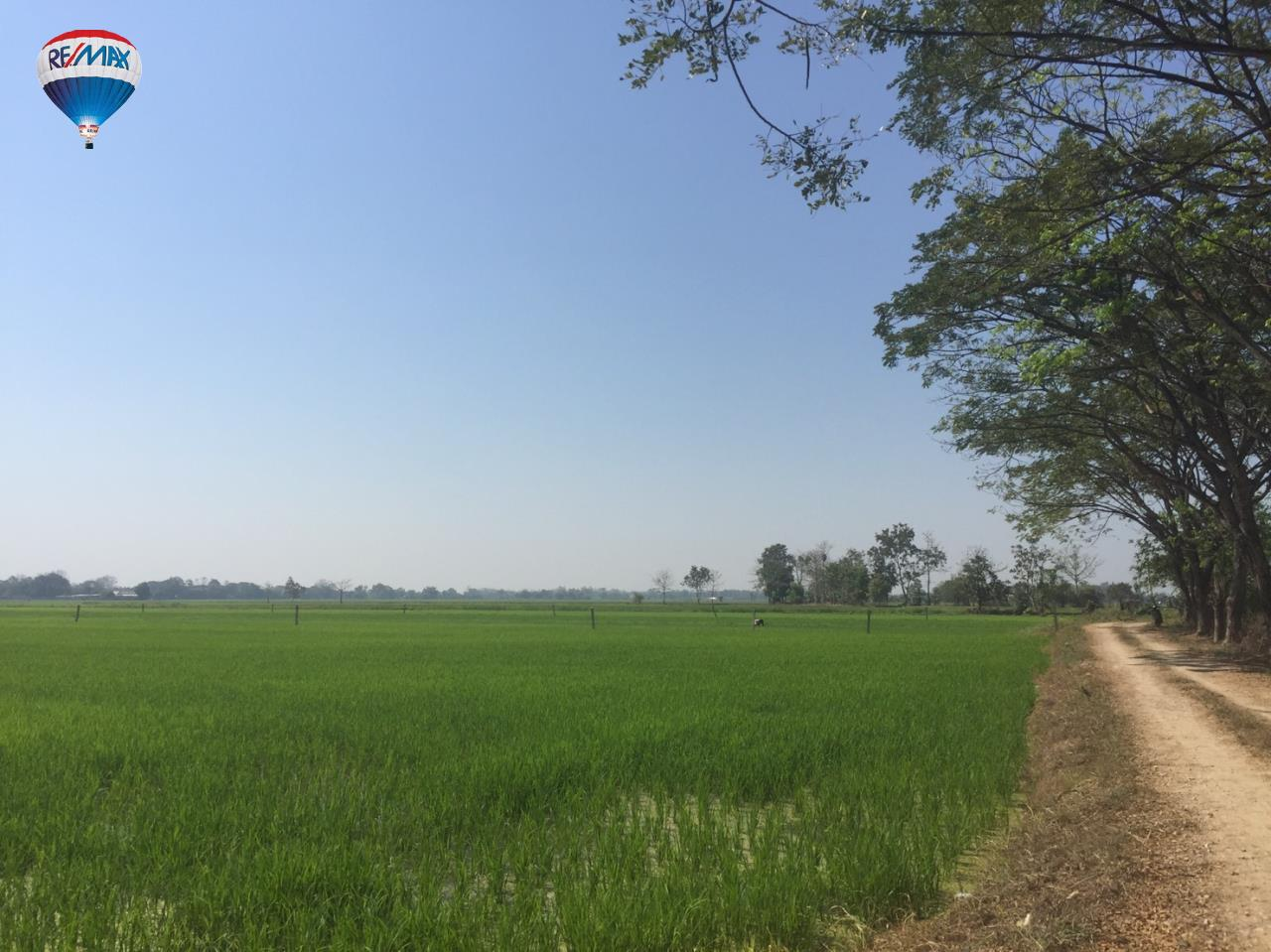 RE/MAX Classic Agency's Rice field for  sale affordable price in Chiangrai 8