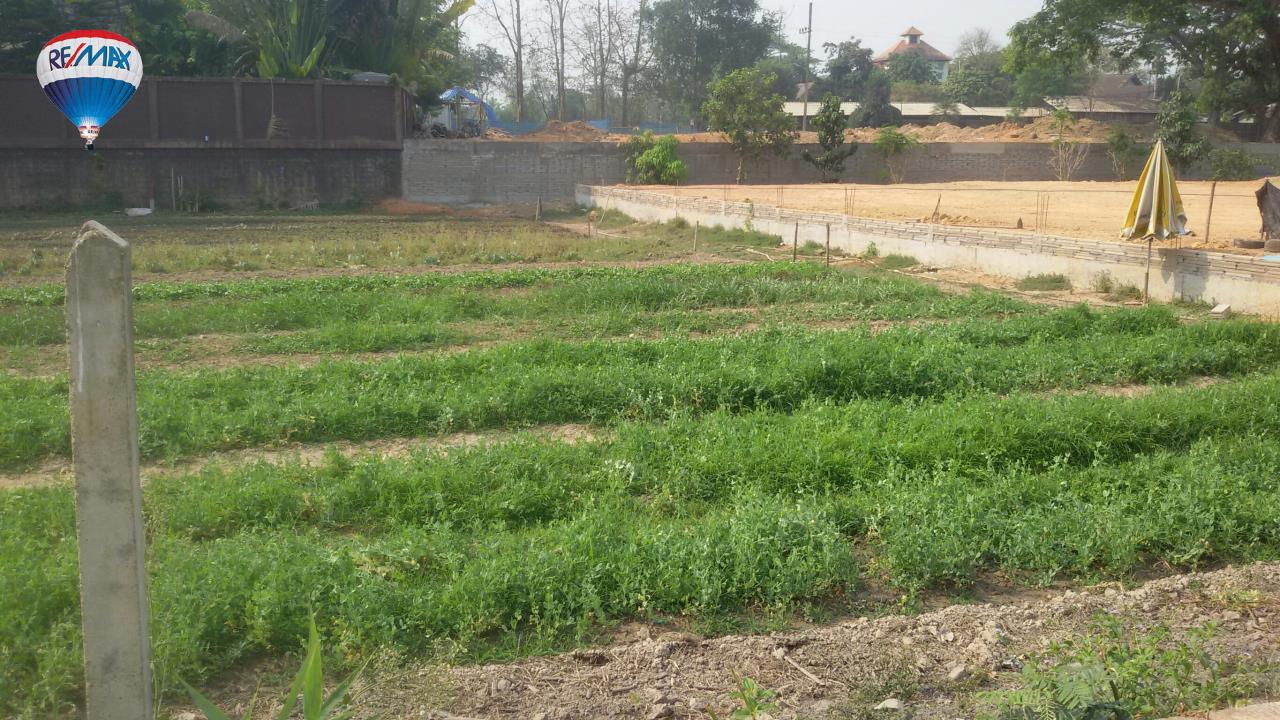 RE/MAX Classic Agency's Land For Sale Low Price Beautiful in Chiangrai 9