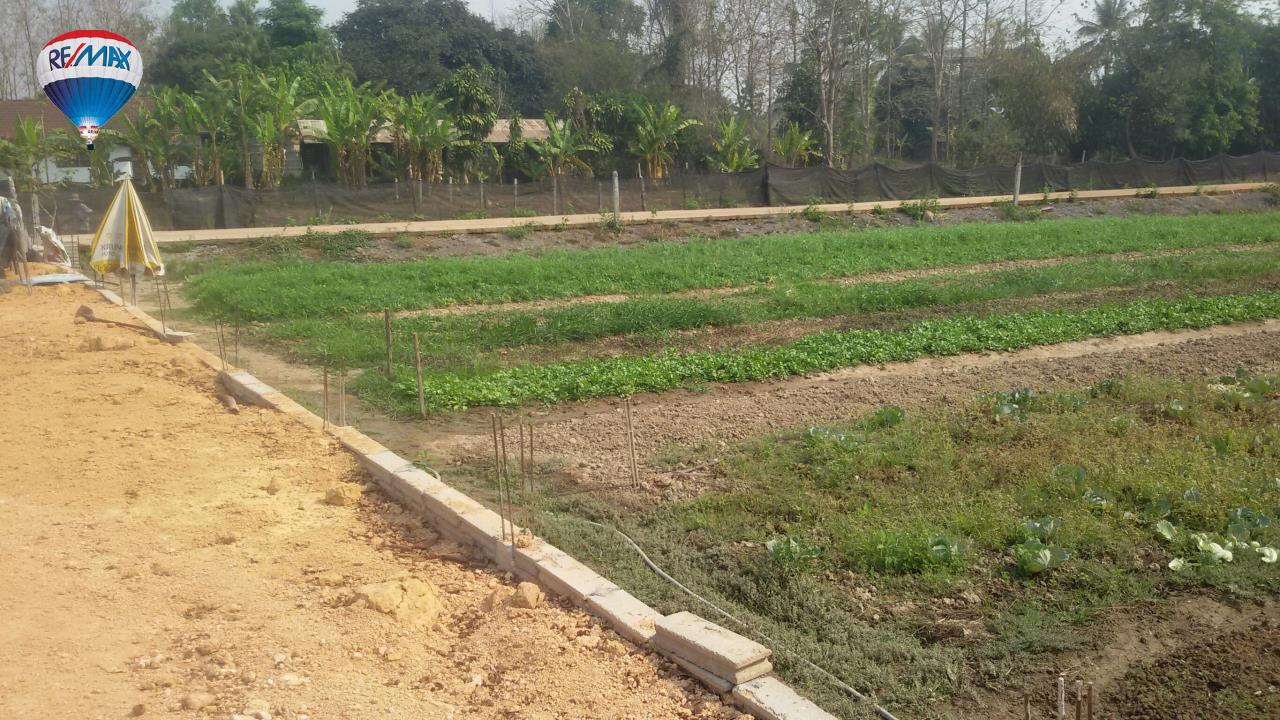 RE/MAX Classic Agency's Land For Sale Low Price Beautiful in Chiangrai 3