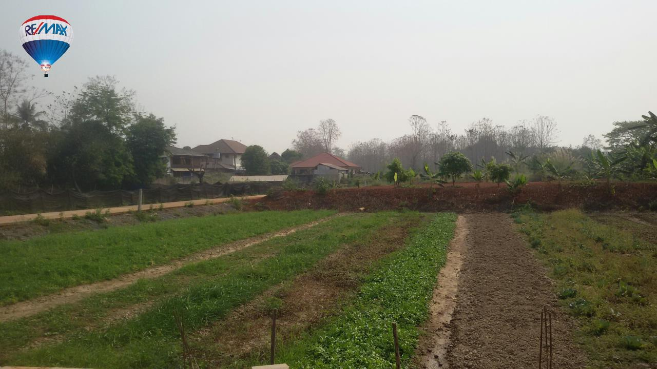 RE/MAX Classic Agency's Land For Sale Low Price Beautiful in Chiangrai 5