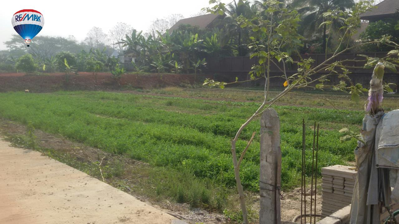 RE/MAX Classic Agency's Land For Sale Low Price Beautiful in Chiangrai 8
