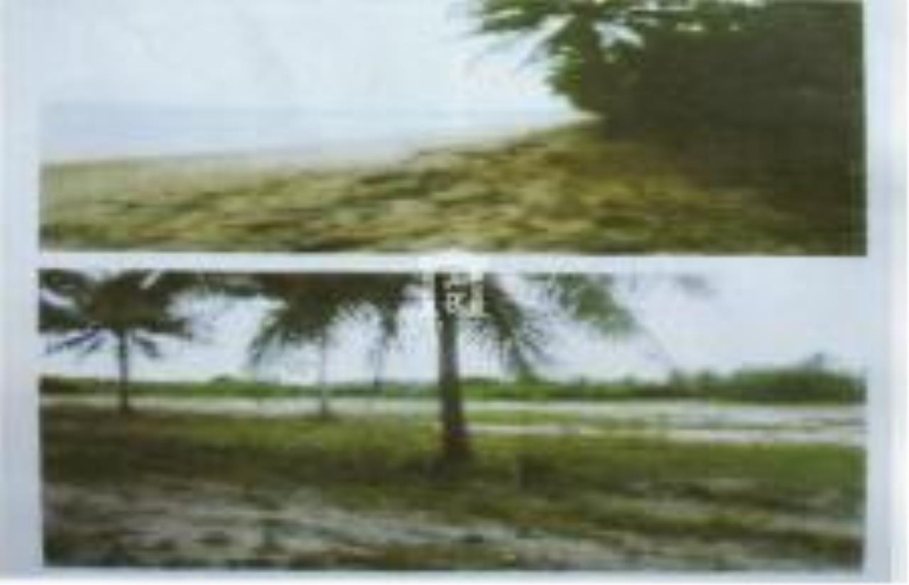 Forbest Properties Agency's 28477 - Land For Sale, in Thap Sakae district, Prachuap Khiri Khan province, land size 75 rai, 1