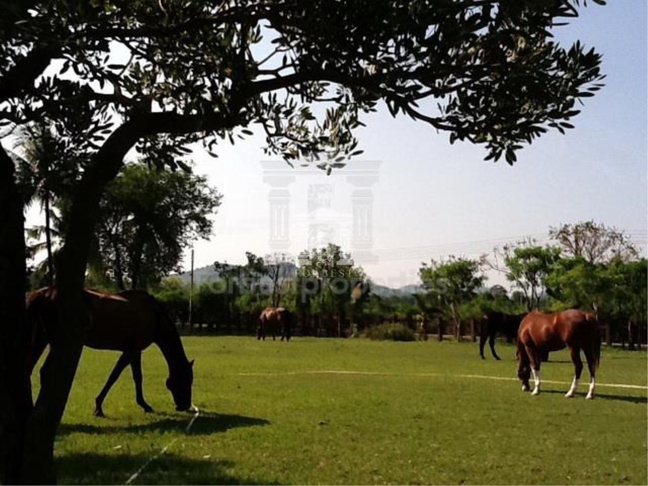 Forbest Properties Agency's 36632 - Land Pak Chong , Khao Yai, Nakhon Ratchasima 48 Rai 27 sq.w. 5
