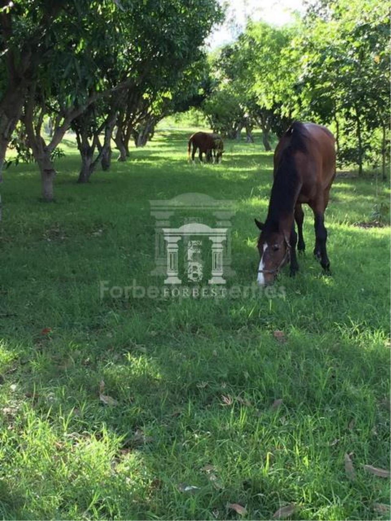 Forbest Properties Agency's 36632 - Land Pak Chong , Khao Yai, Nakhon Ratchasima 48 Rai 27 sq.w. 7