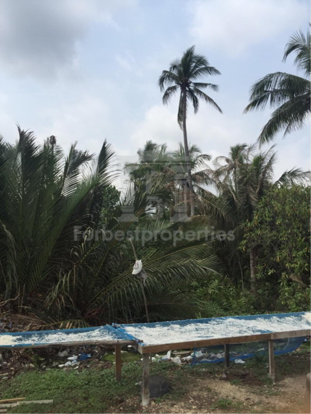 Forbest Properties Agency's 35941-Land For Sale, on Phetchahung Rd., land size 43 rai 7