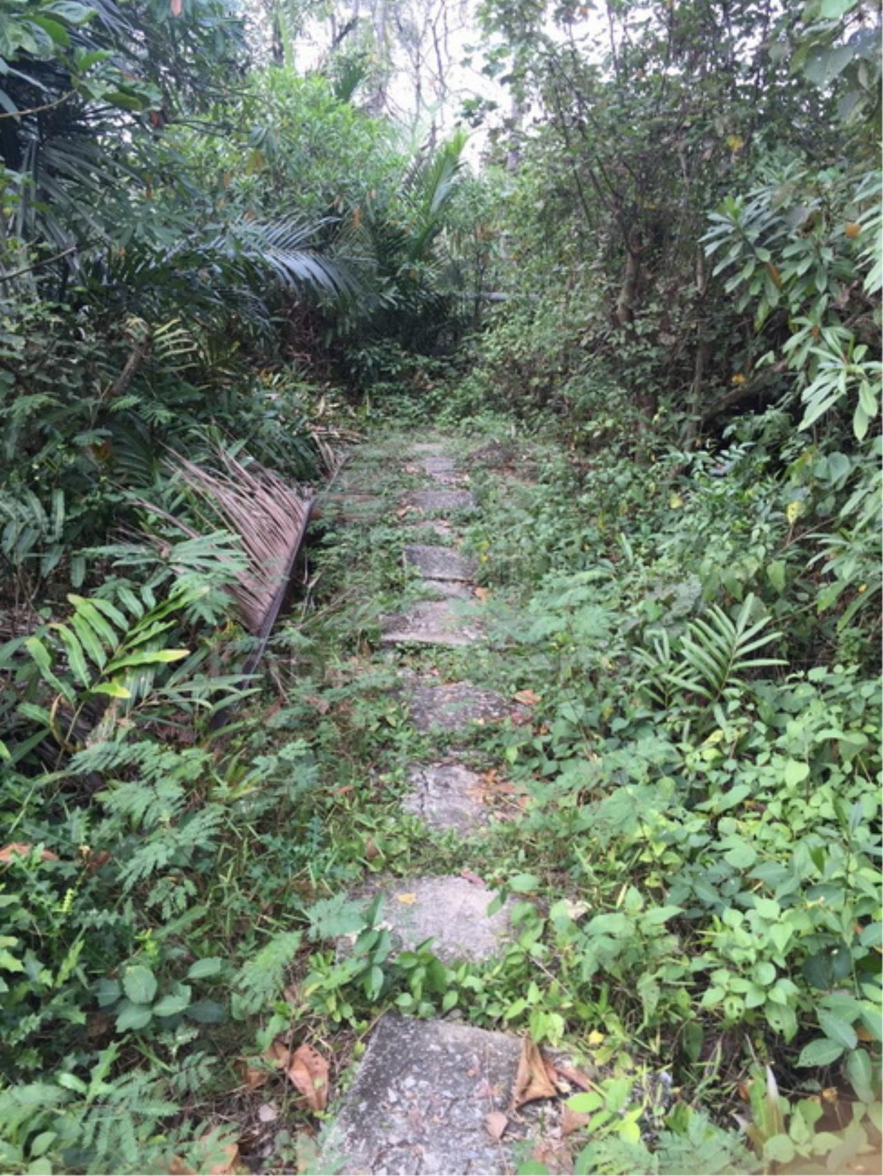 Forbest Properties Agency's 35941-Land For Sale, on Phetchahung Rd., land size 43 rai 3