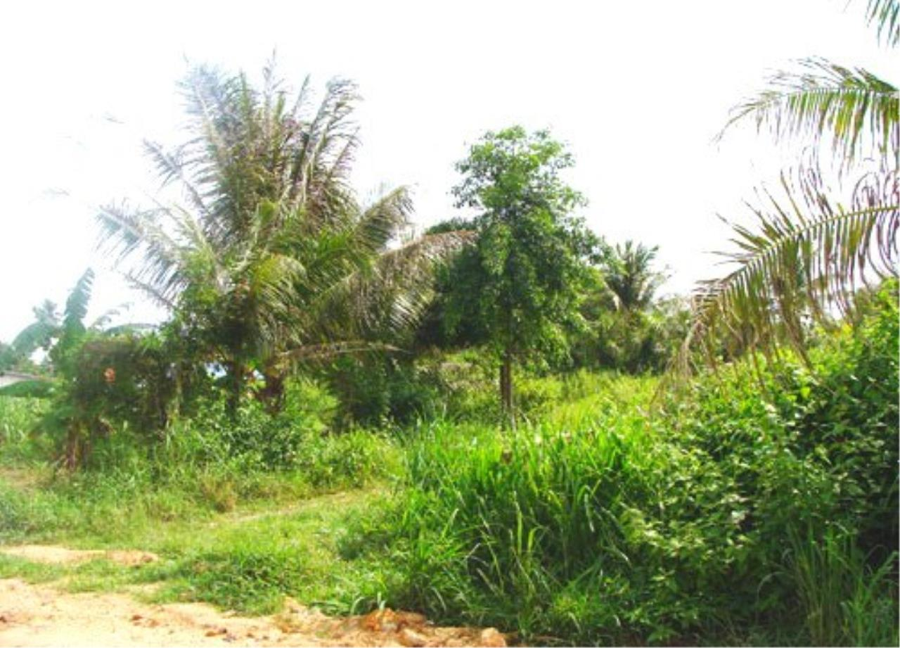RE/MAX Town & Country Property Agency's Land for sale in East Pattaya 4