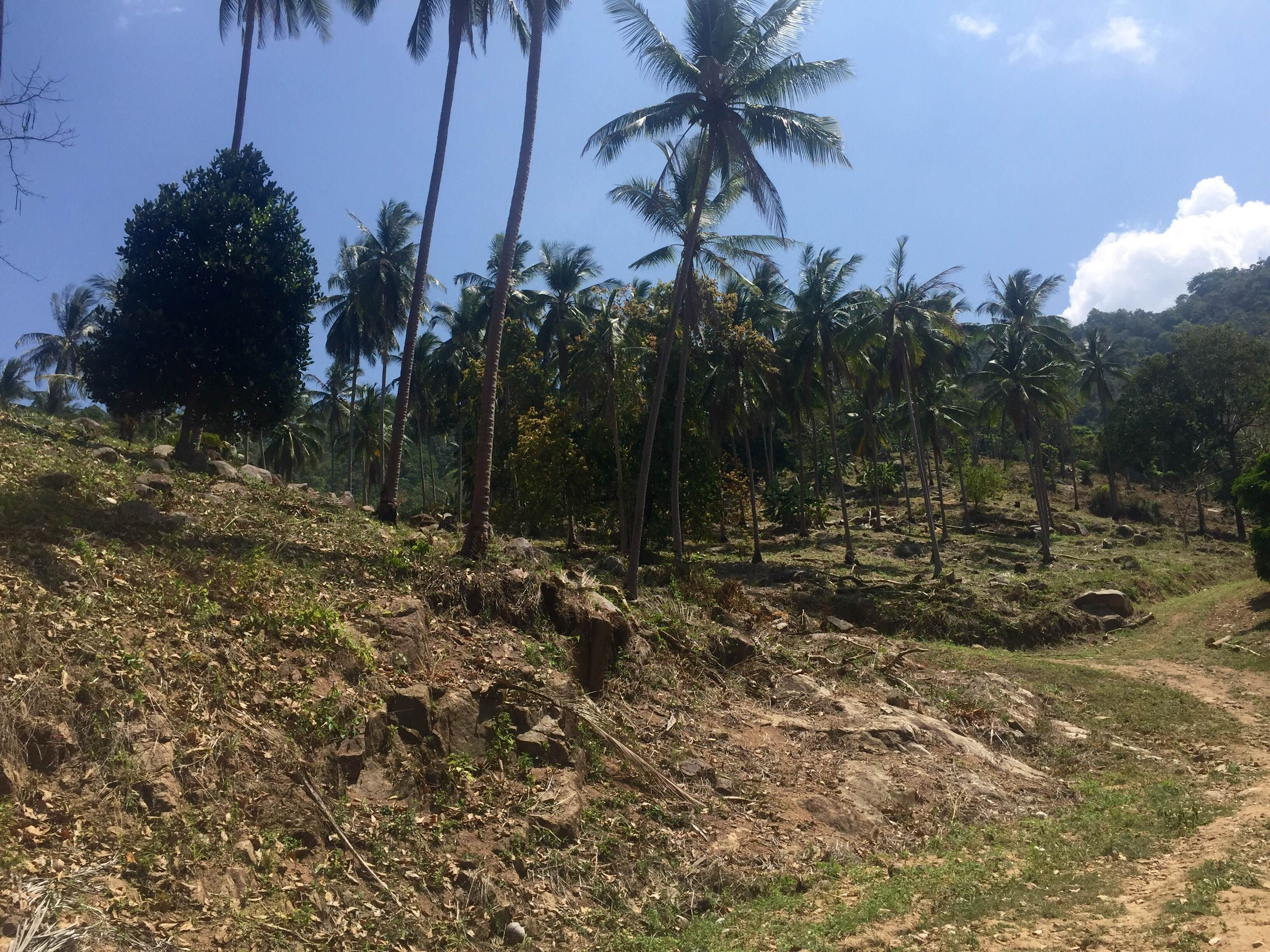 RE/MAX Island Real Estate Agency's Amazing seaview plots for sale on chaweng hill 1