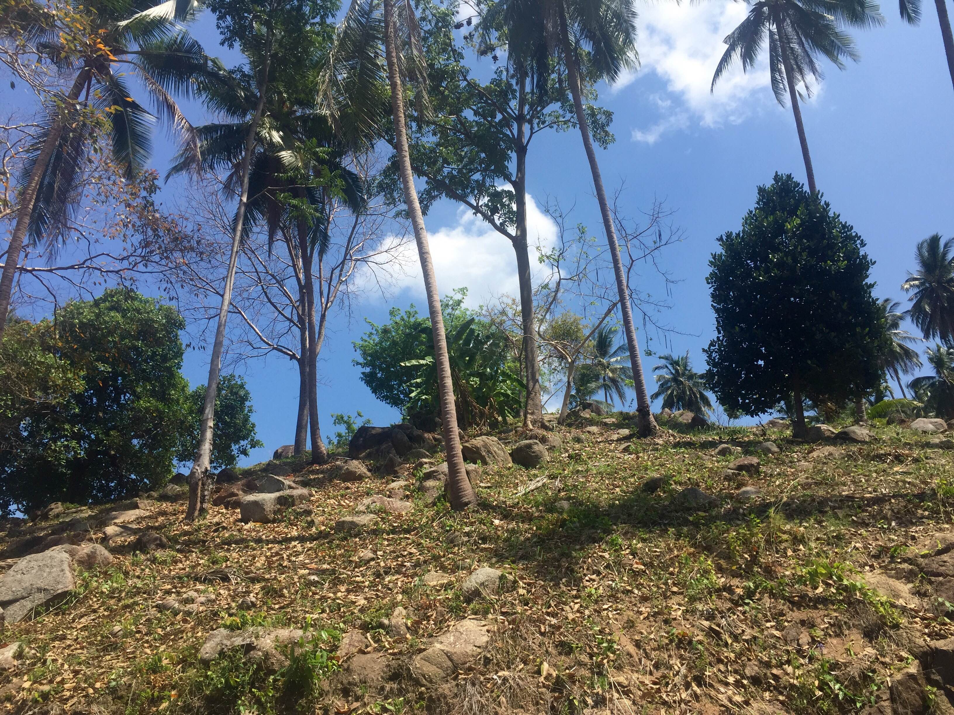 RE/MAX Island Real Estate Agency's Amazing seaview plots for sale on chaweng hill 2