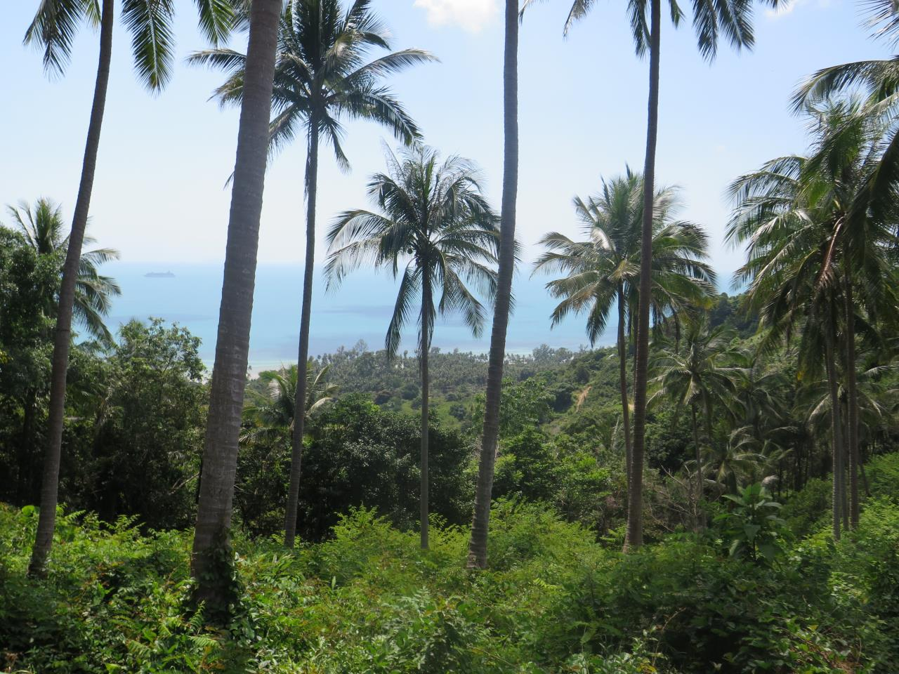 RE/MAX Island Real Estate Agency's Land for Sale in Bang Por 1