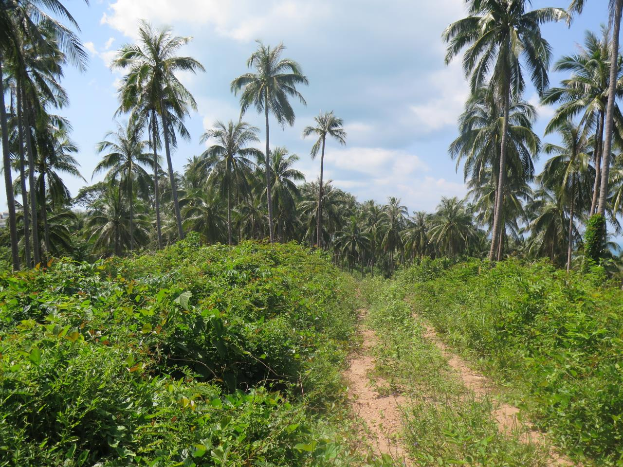 RE/MAX Island Real Estate Agency's Land for Sale in Bang Por 2