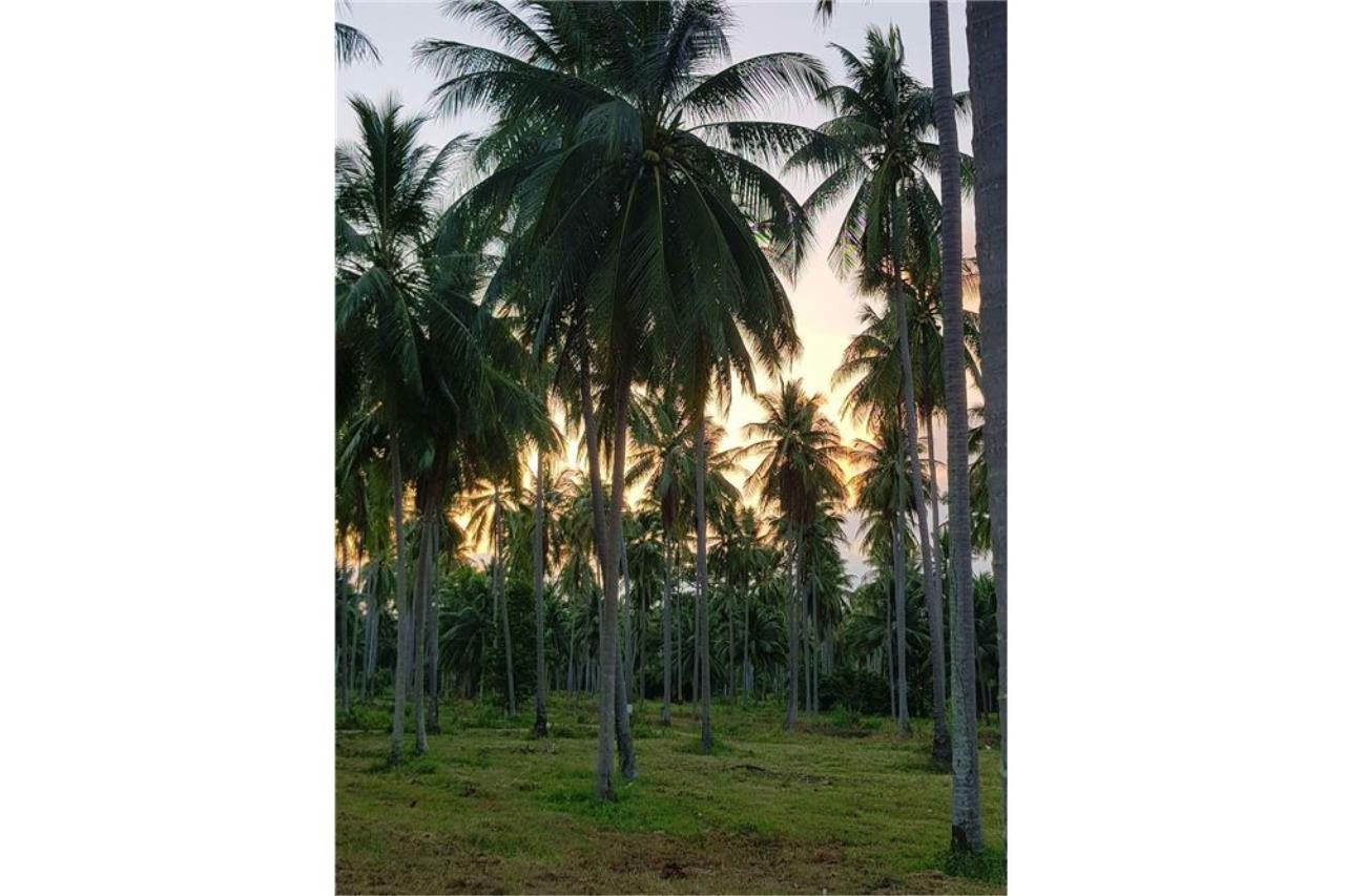 RE/MAX Island Real Estate Agency's Affordable beach land for sale in Tha Sala. 10