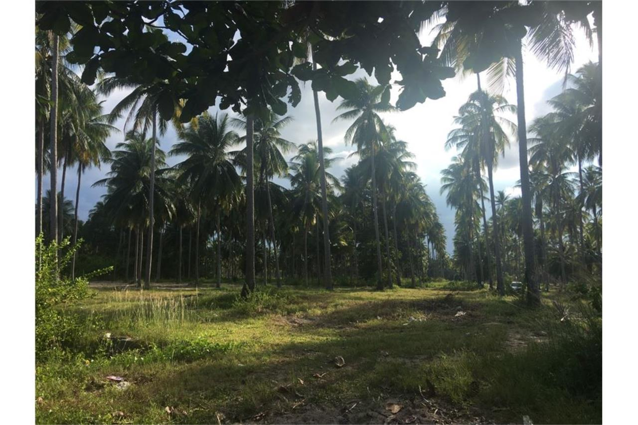 RE/MAX Island Real Estate Agency's Affordable beach land for sale in Tha Sala. 9