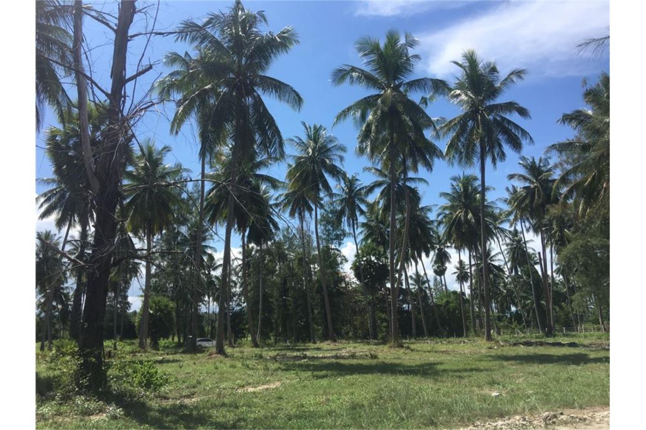 RE/MAX Island Real Estate Agency's Beach land for sale in Tha Sala 8