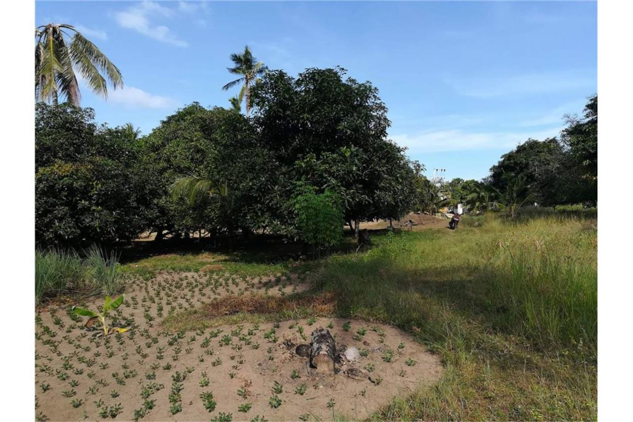 RE/MAX Island Real Estate Agency's Perfect Land Plot for Investment in Koh Samui 4