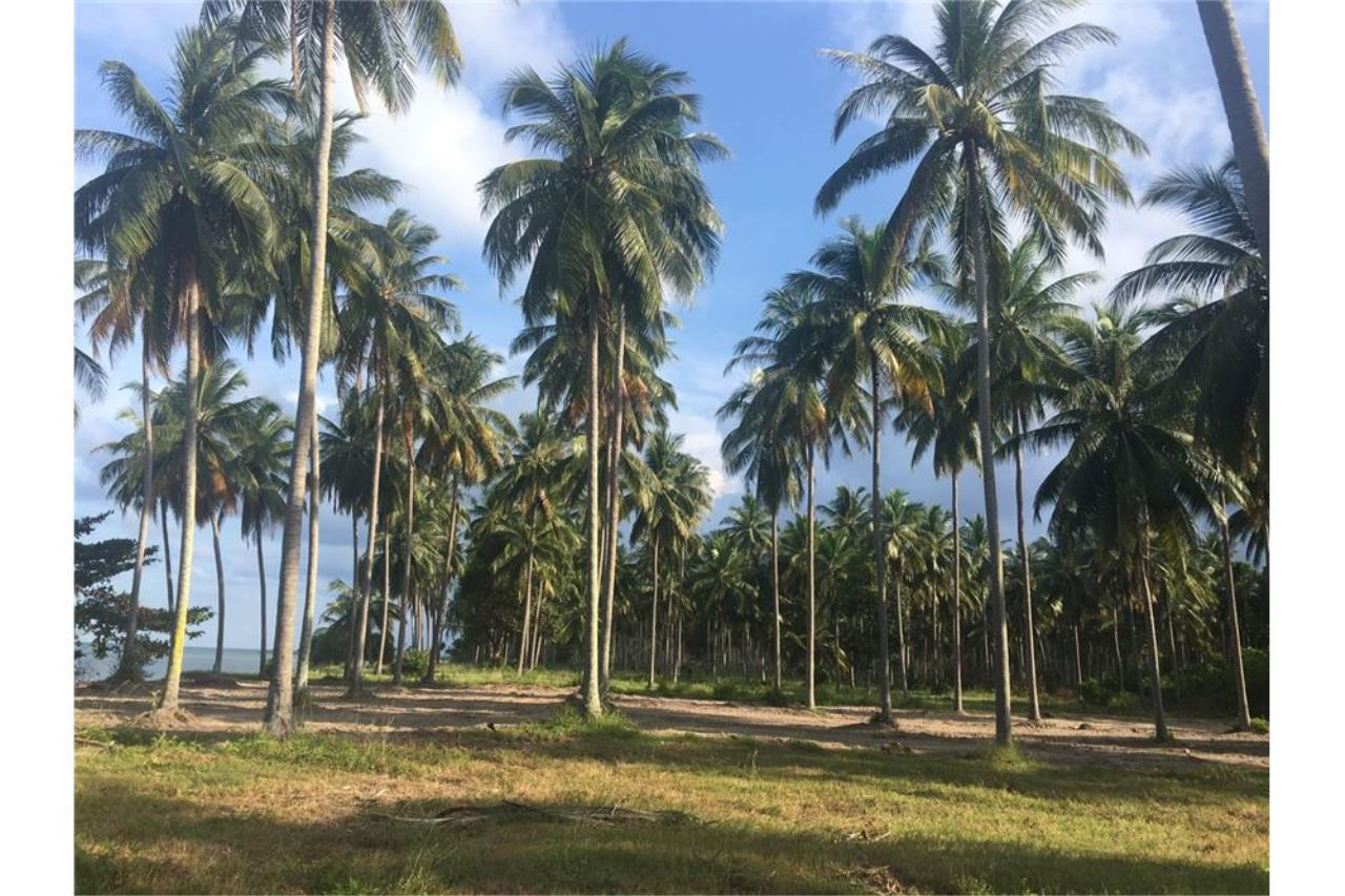 RE/MAX Island Real Estate Agency's Affordable beach land for sale in Tha Sala 12