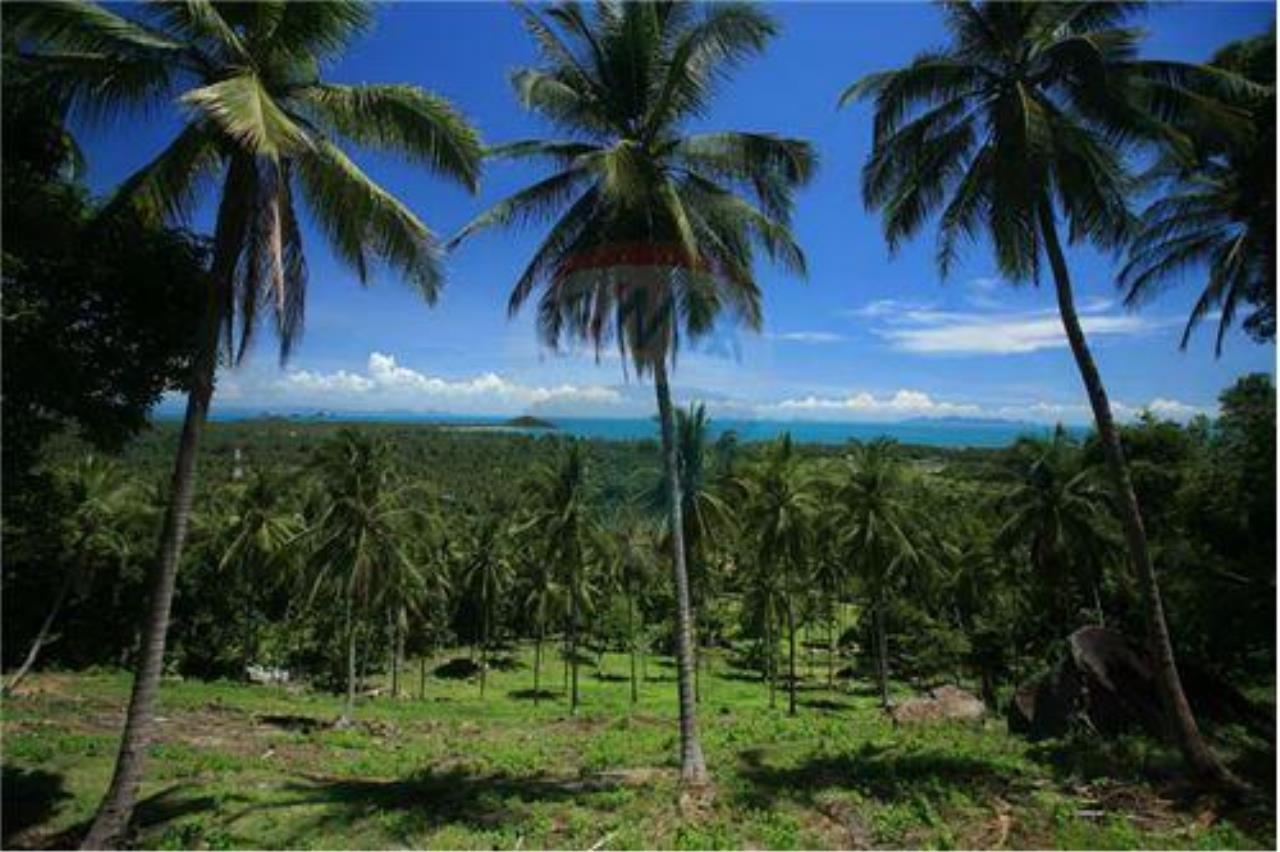 RE/MAX Island Real Estate Agency's Beautiful land for sale in Lipa Noi 10