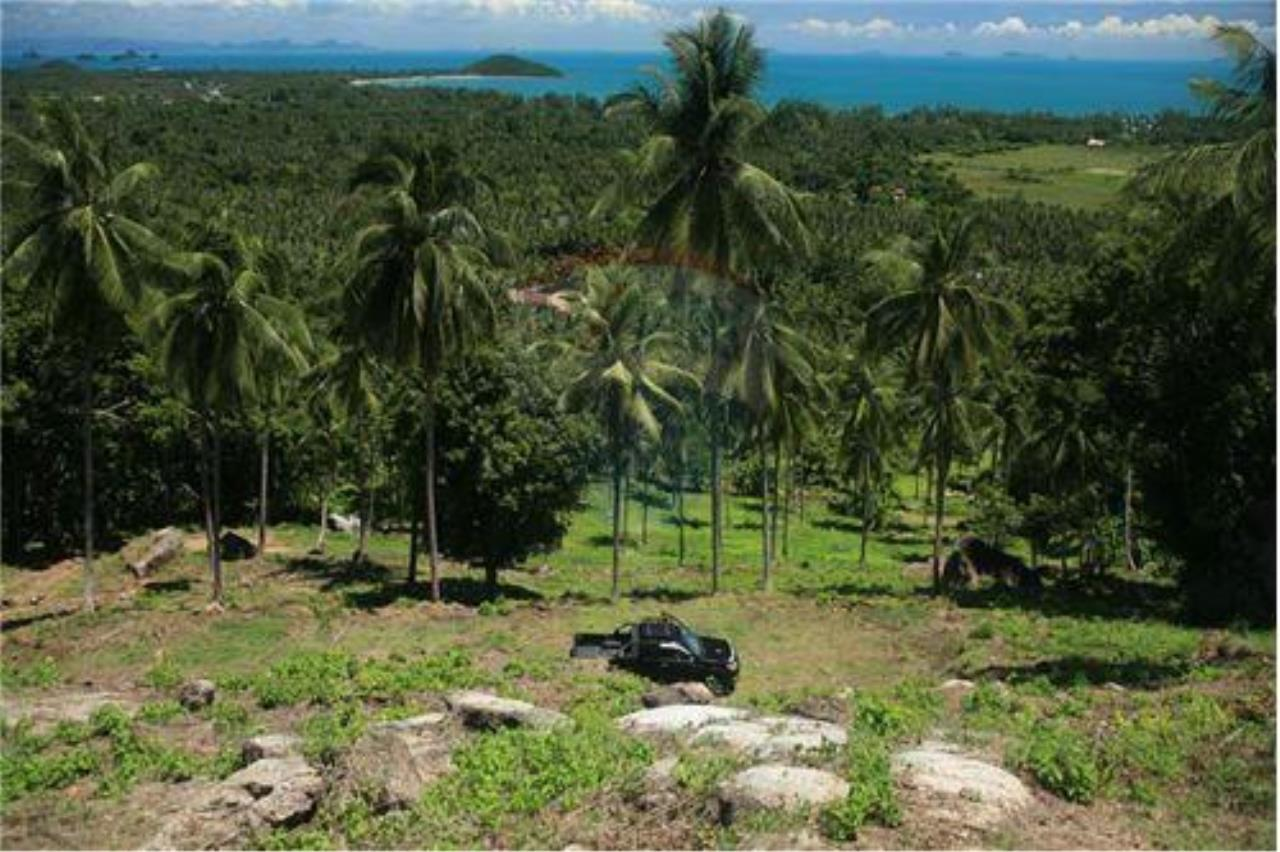 RE/MAX Island Real Estate Agency's Beautiful land for sale in Lipa Noi 14