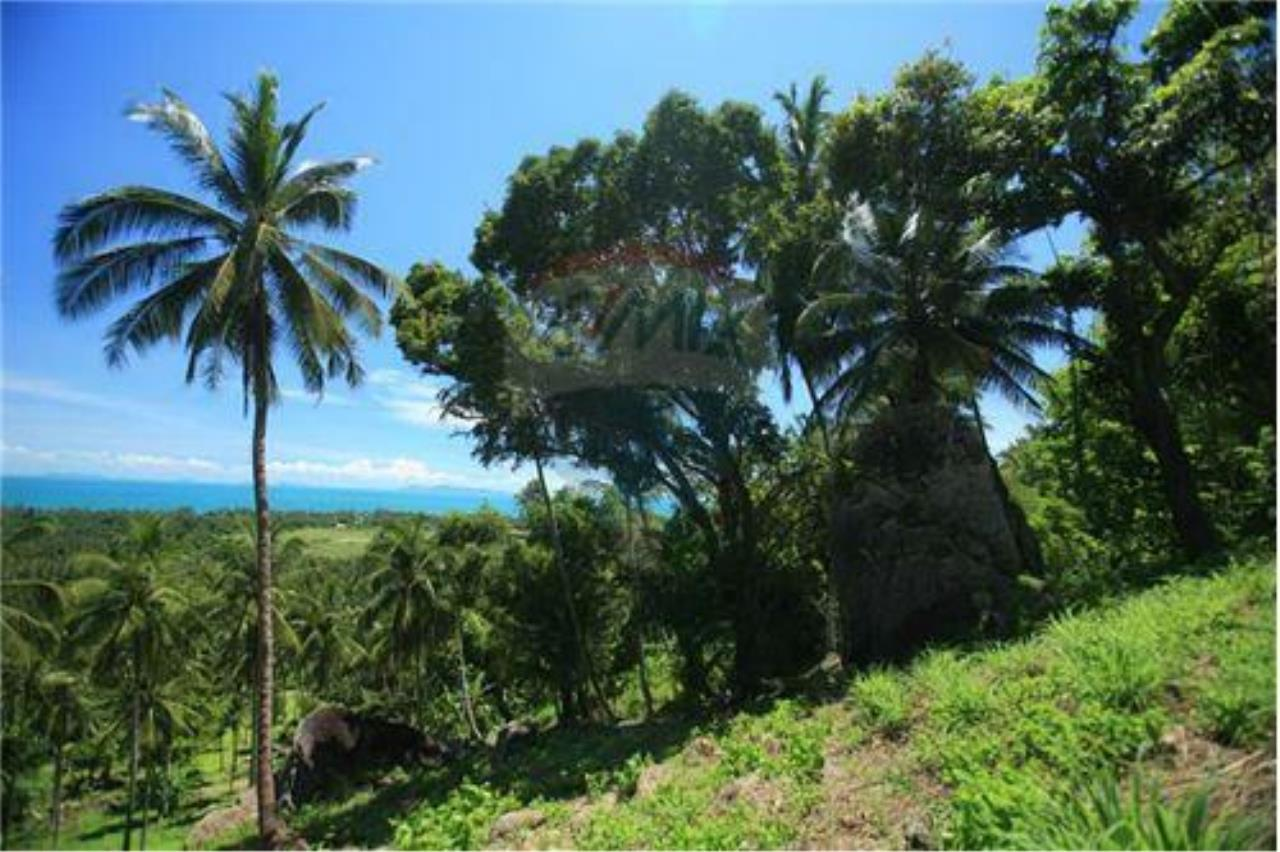 RE/MAX Island Real Estate Agency's Beautiful land for sale in Lipa Noi 8