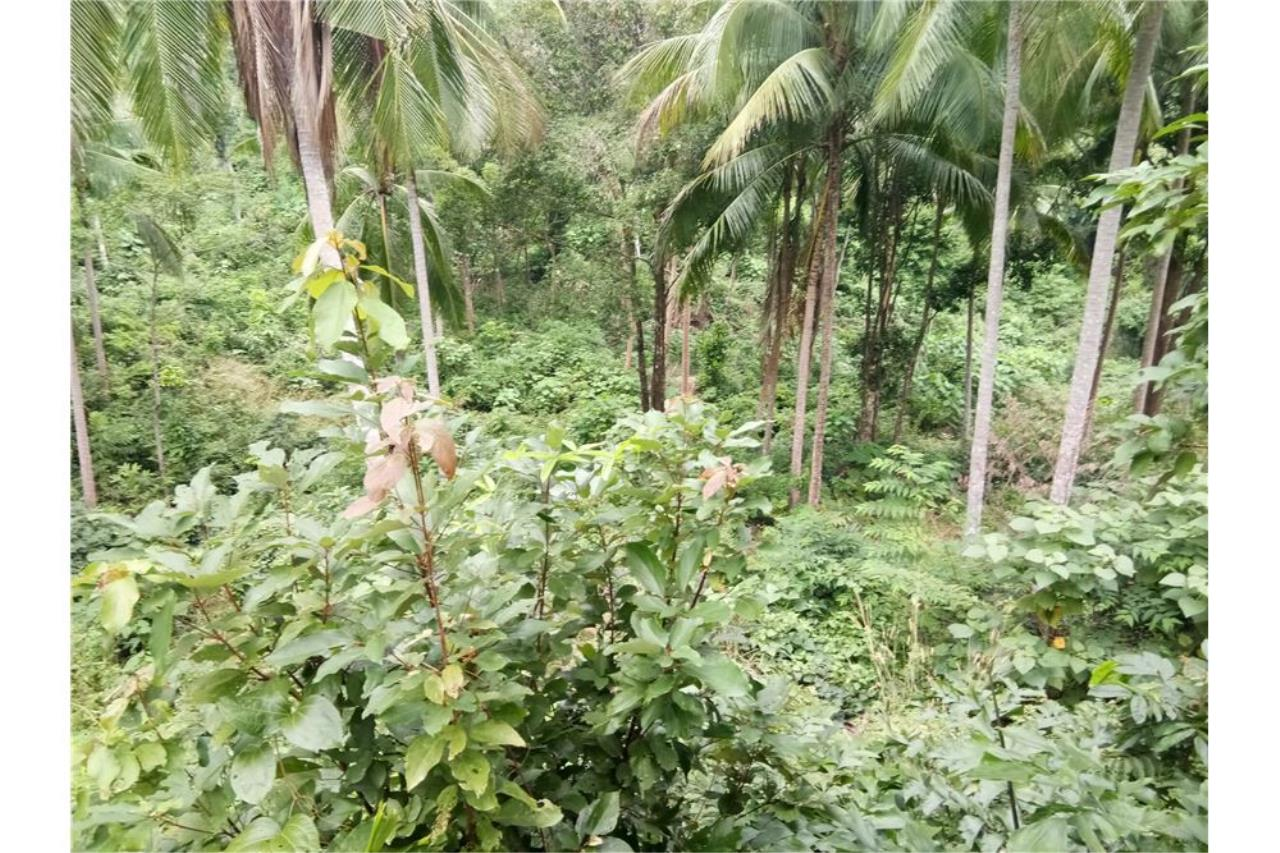 RE/MAX Island Real Estate Agency's Beautiful sea view land for sale in Chaweng 4