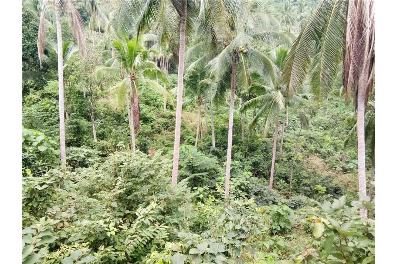 RE/MAX Island Real Estate Agency's Beautiful sea view land for sale in Chaweng 3