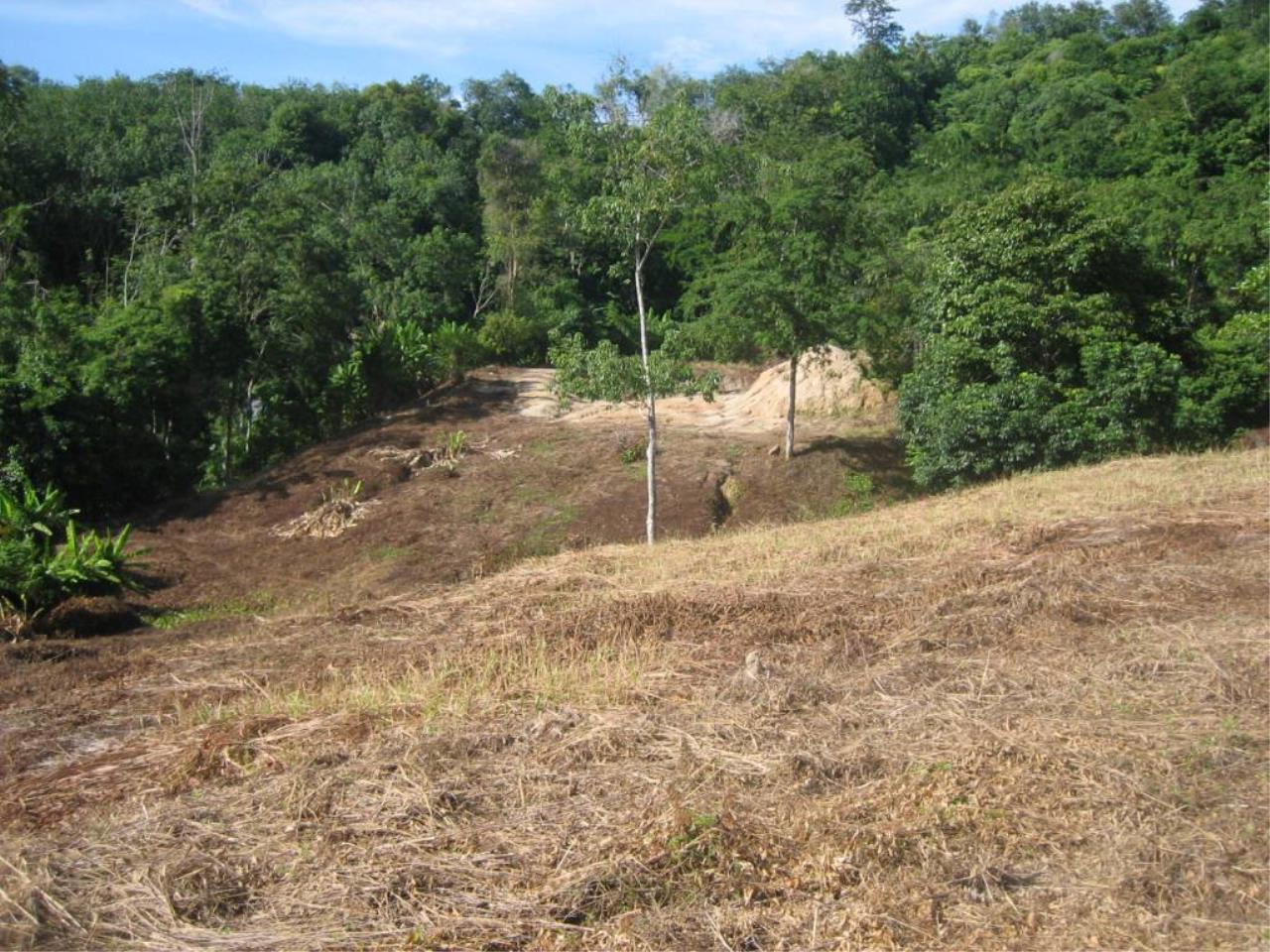 REAL Phuket  Agency's Chalong Hillside Land Plot of 14.6 Rai on Big Buddha Mountain 7