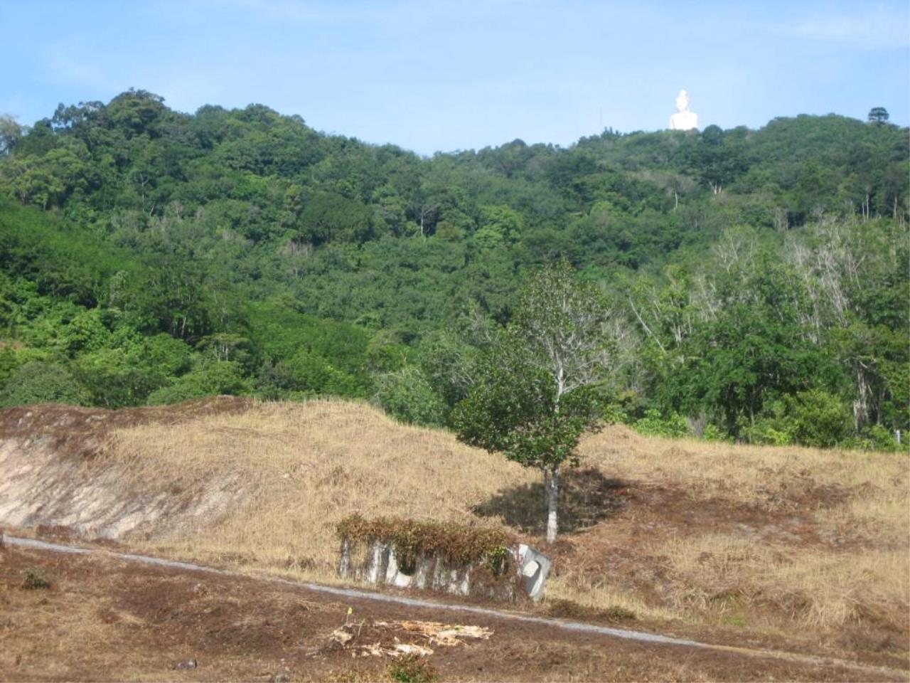 REAL Phuket  Agency's Chalong Hillside Land Plot of 14.6 Rai on Big Buddha Mountain 4