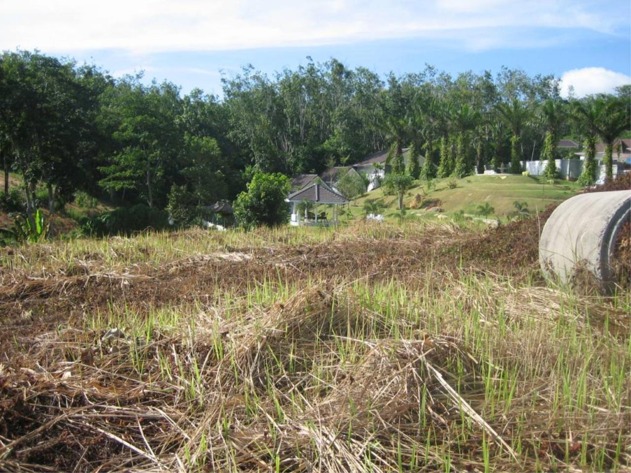 REAL Phuket  Agency's Chalong Hillside Land Plot of 14.6 Rai on Big Buddha Mountain 5
