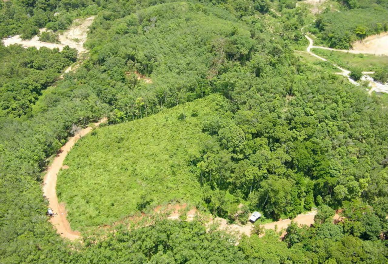 REAL Phuket  Agency's 6+ Rai Hillside Land in Bang Tao 3