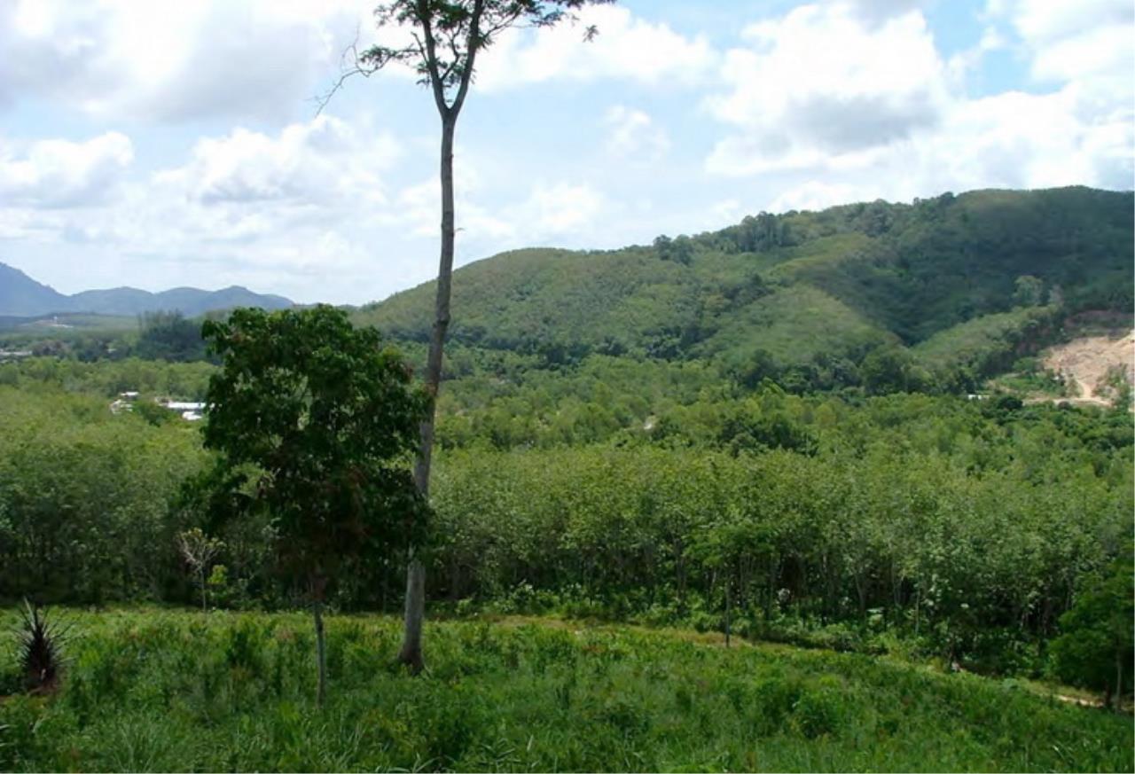 REAL Phuket  Agency's 6+ Rai Hillside Land in Bang Tao 2