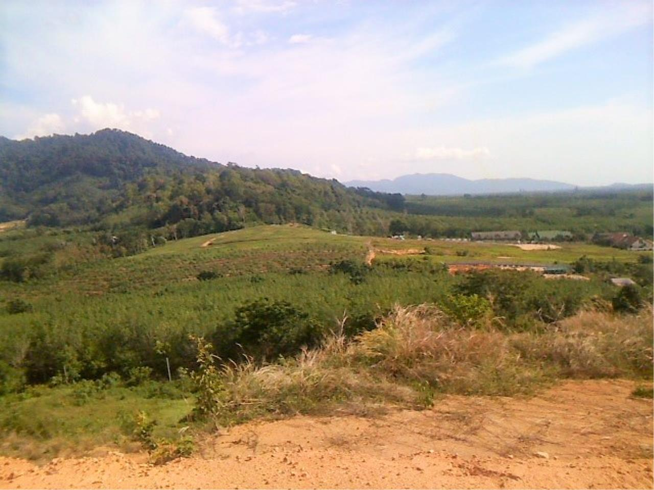 REAL Phuket  Agency's 6 Rai of Seaview Land near Mission Hills Golf Course - only THB 3.5m per Rai 4