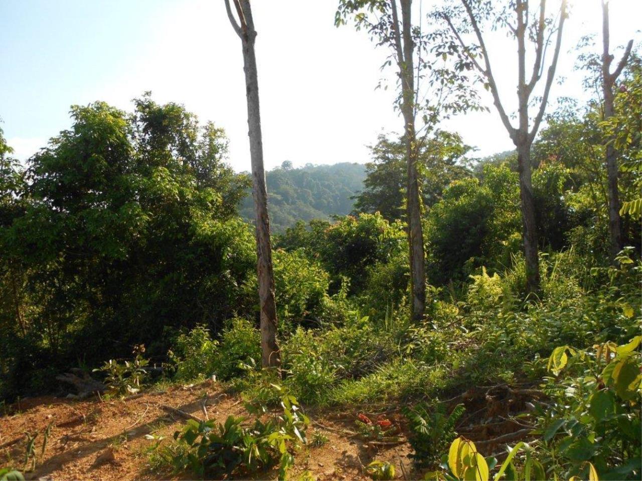 REAL Phuket  Agency's Phuket East - 1 Rai of Hillside Land with Panoramic Sea Views 4