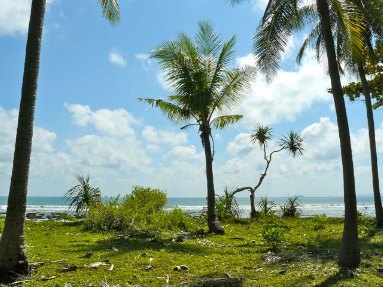REAL Phuket  Agency's Koh Lanta - 23 Rai Beachfront Land with 210 meter Beach Frontage 2