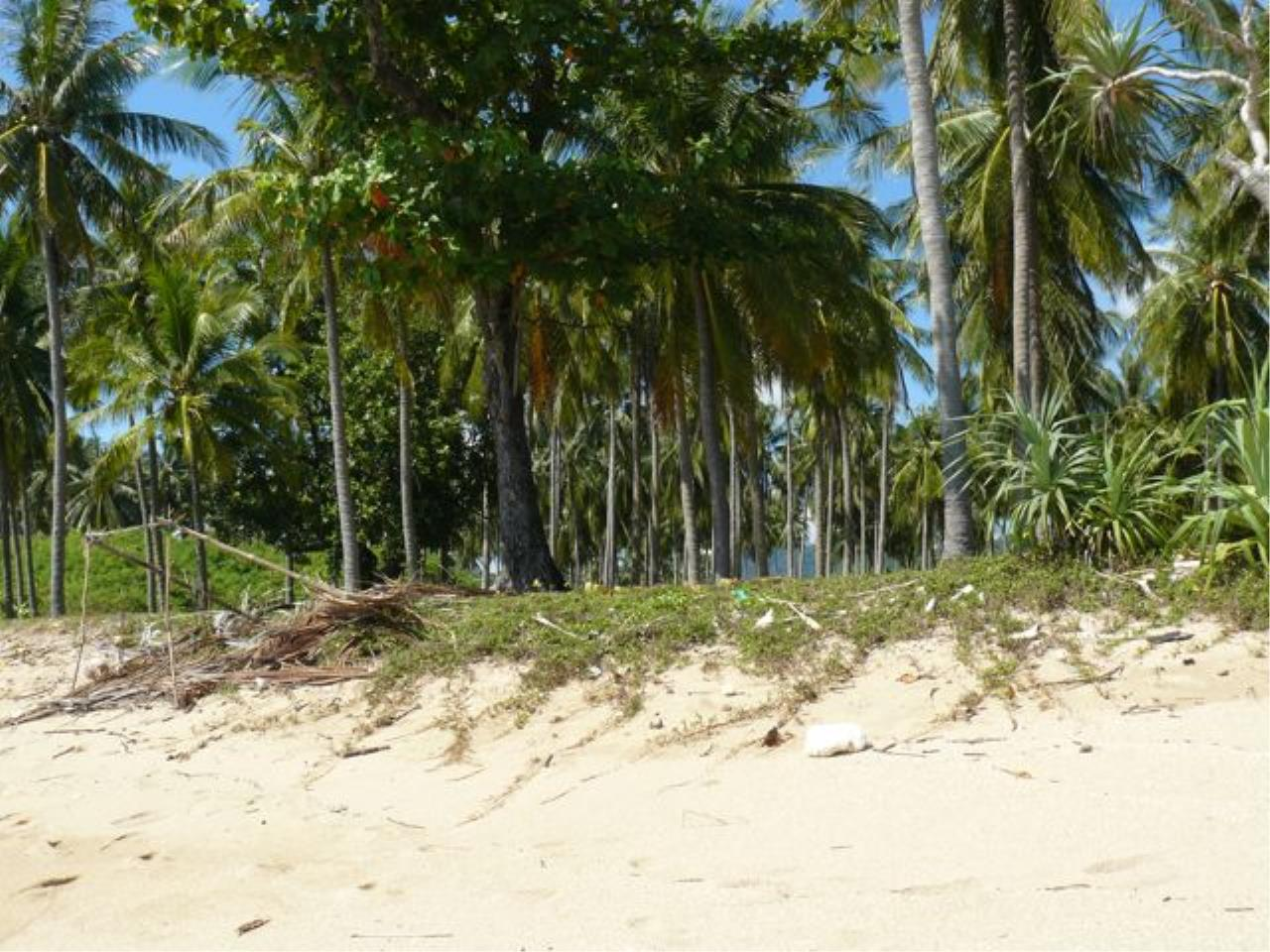 REAL Phuket  Agency's Koh Lanta - 23 Rai Beachfront Land with 210 meter Beach Frontage 4