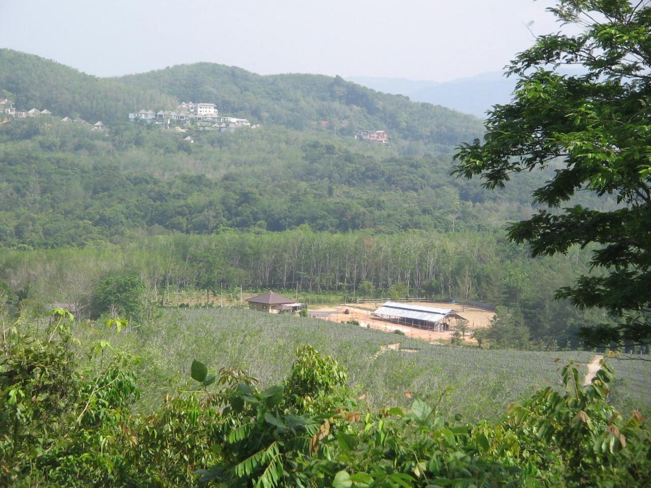 REAL Phuket  Agency's 4 Rai Flat Land in Layan - Great Value! 1