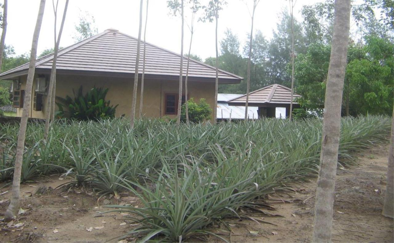 REAL Phuket  Agency's 4 Rai Flat Land in Layan - Great Value! 7