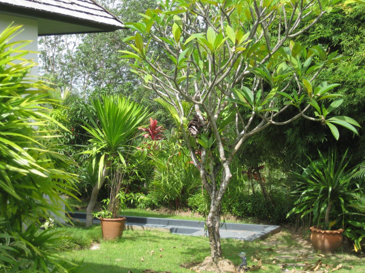 REAL Phuket  Agency's Deluxe 3-Bedroom Pool Villa Overlooking Layan Beach 45