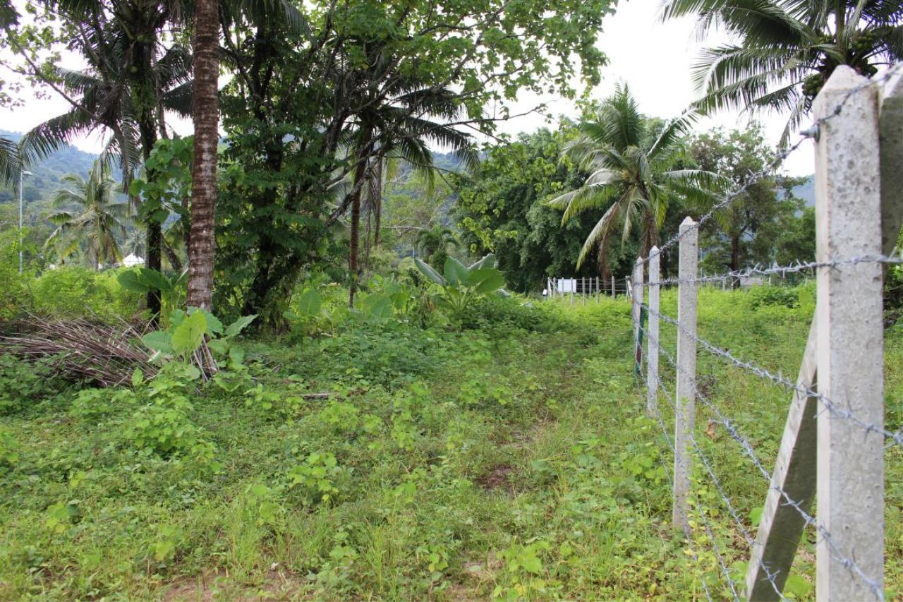 REAL Phuket  Agency's 40+ Rai Development Land in Kathu - below THB 9m/Rai 7